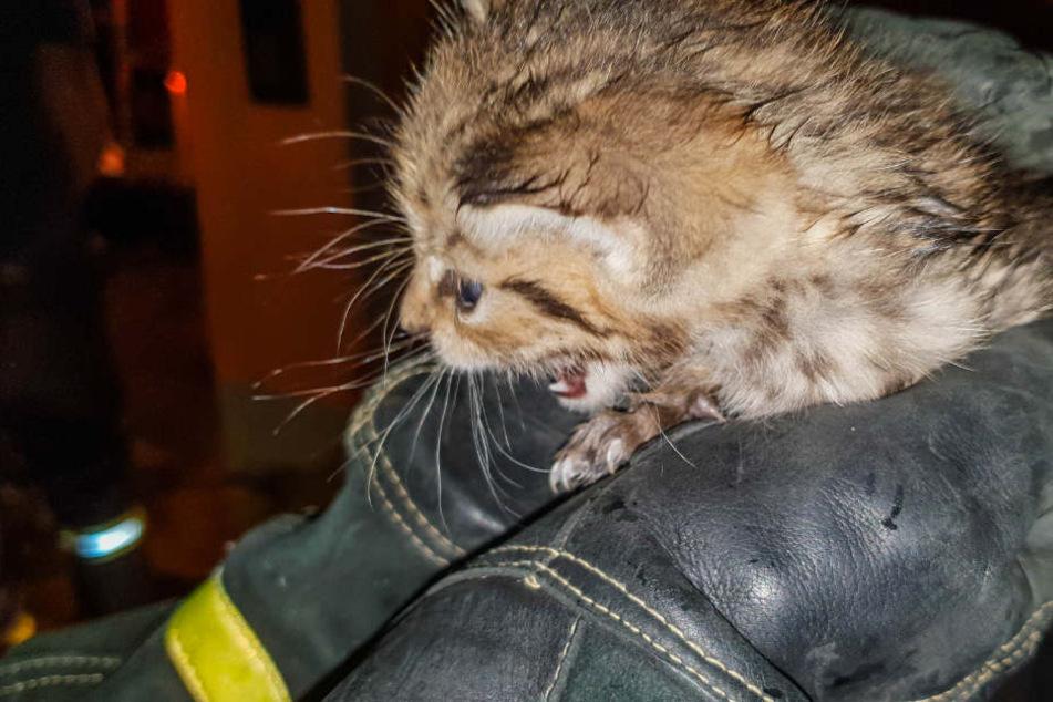 Große Rettungsaktion: Katzenbaby fällt in Abwasserrohr