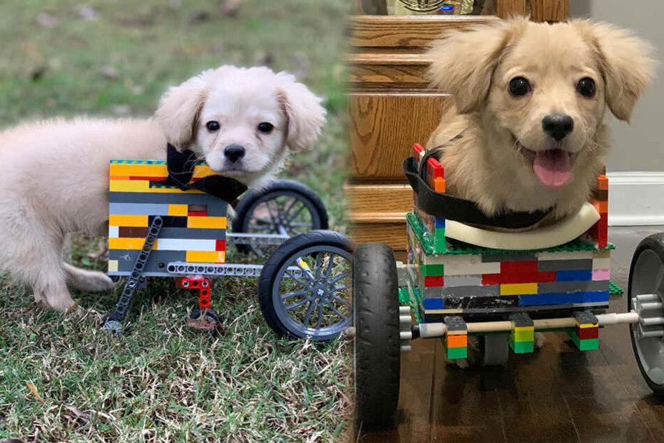 Gracie mit ihrem ersten Rollstuhl im November 2018 (links) und mit dem Nachfolger im Februar 2019.