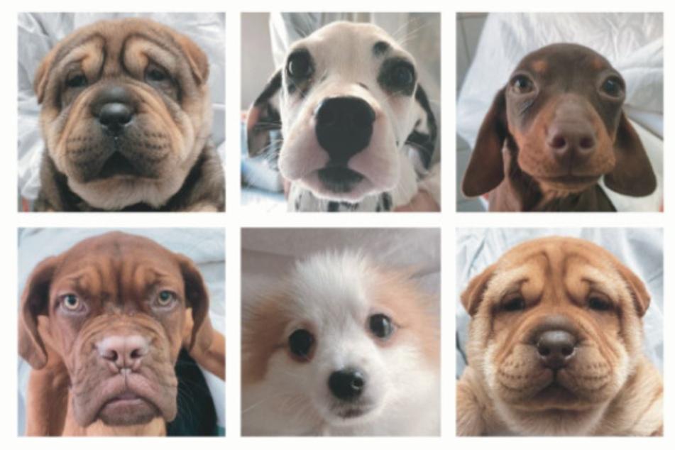Diese Welpen gehören zu beschlagnahmten Hunden, die im Tierheim landeten.