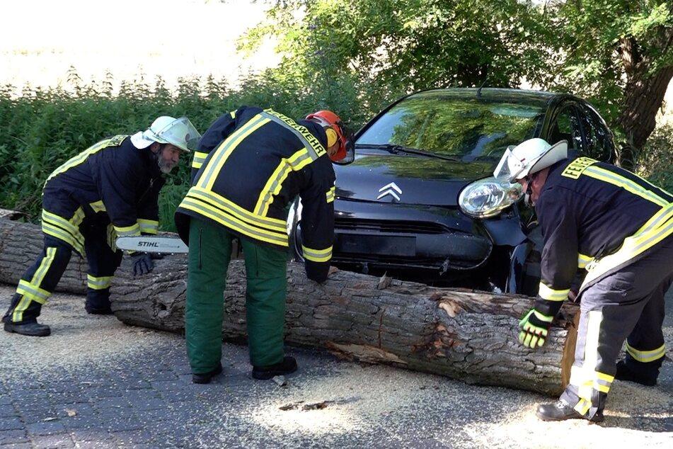 Zur Bergung musste die Feuerwehr den Baum auseinander sägen.