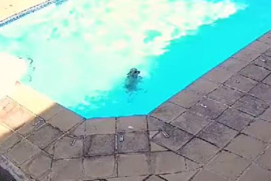 Chuck wirkte im Pool mehr als verloren, schwebte nach einer Weile in Lebensgefahr.