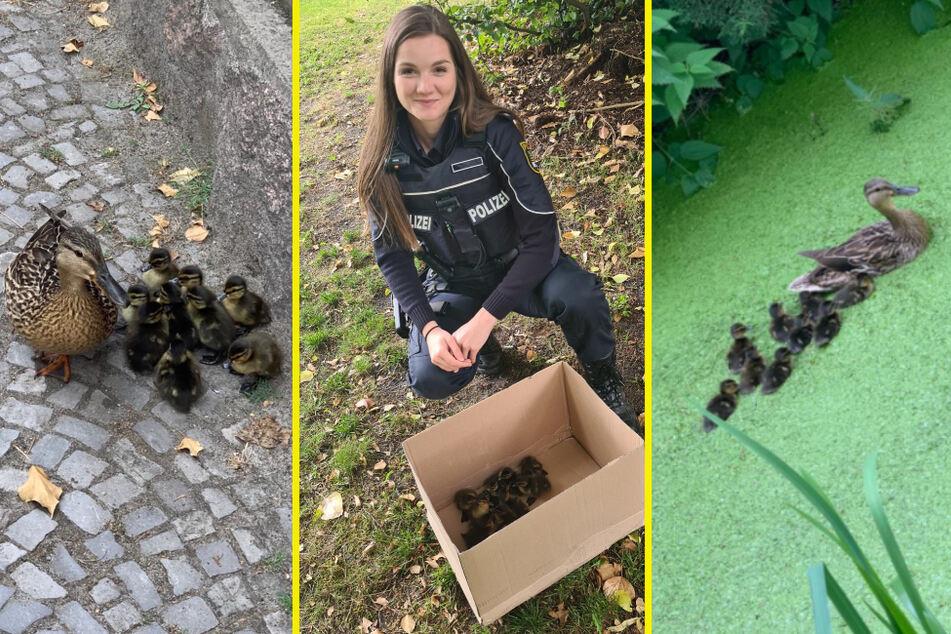 Tierischer Einsatz in Salzwedel: Polizeibeamte haben am Mittwoch einen Entenfamilie gerettet.
