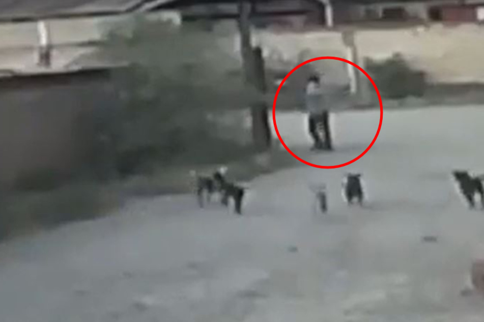 Mexican man dies in gruesome dog attack