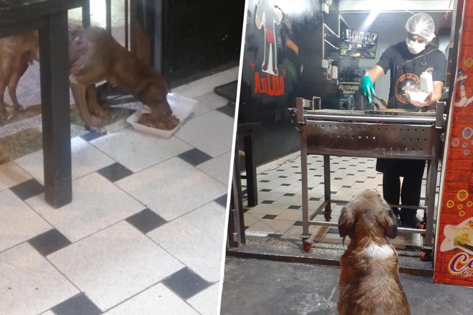 Dieser Restaurant-Besitzer brät jedem Streuner eine kostenlose Mahlzeit