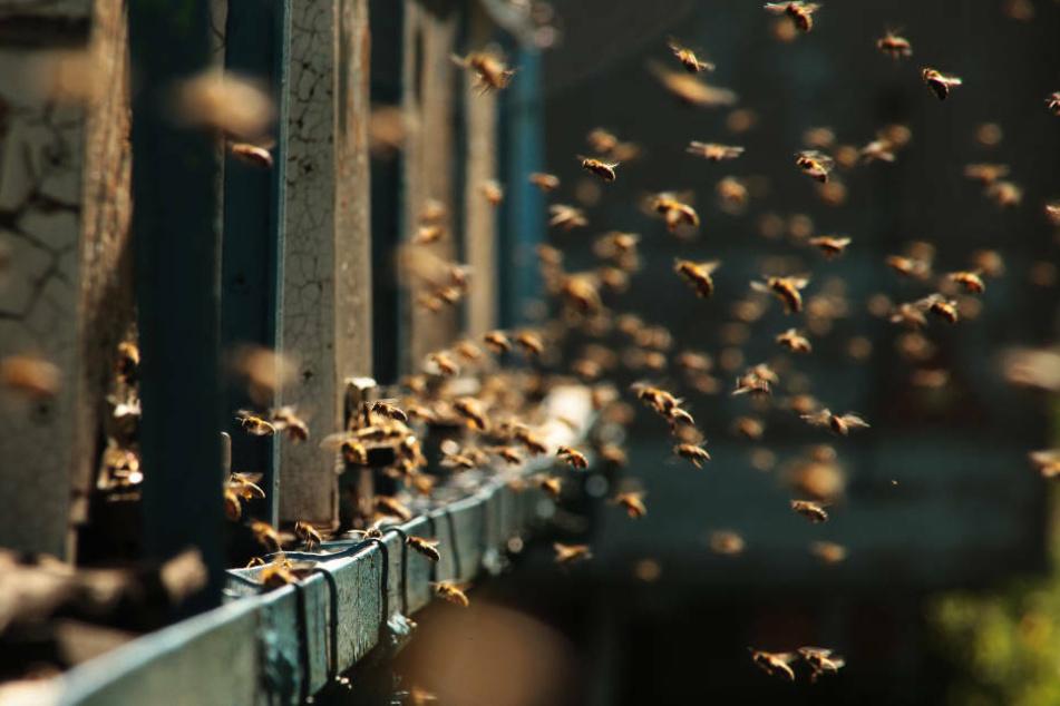 Tausende Bienen stürzen sich in Würzburger City auf Fahrrad
