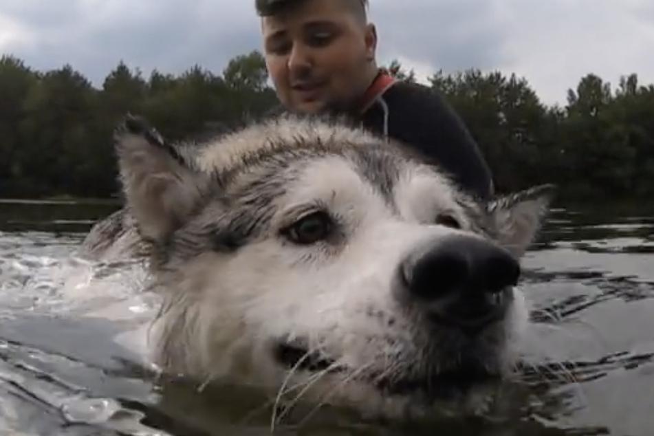 Musste ordentlich paddeln, um den Kopf über Wasser zu halten: Husky-Hündin Lya.