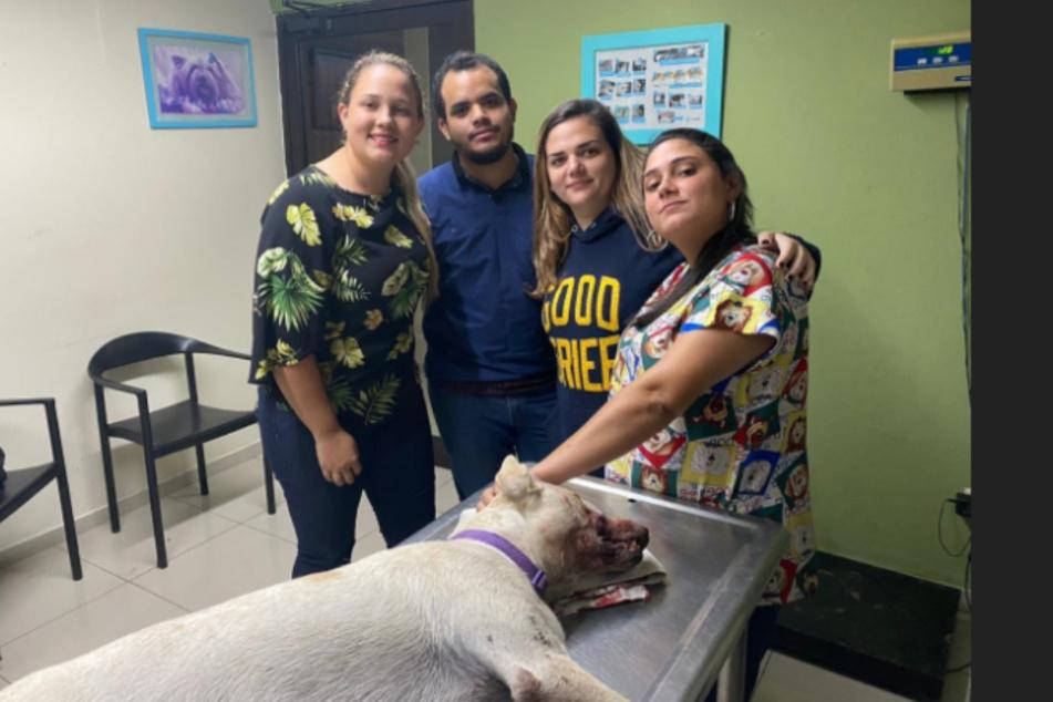 """Tierärzte und das Bündnis """"GEGEN Tierquälerei"""" kümmern sich liebevoll um den stark verwundeten Hund."""