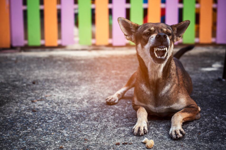Hundebesitzer sind für ihre Tiere verantwortlich. Dazu zählt auch das regelmäßige Impfen.