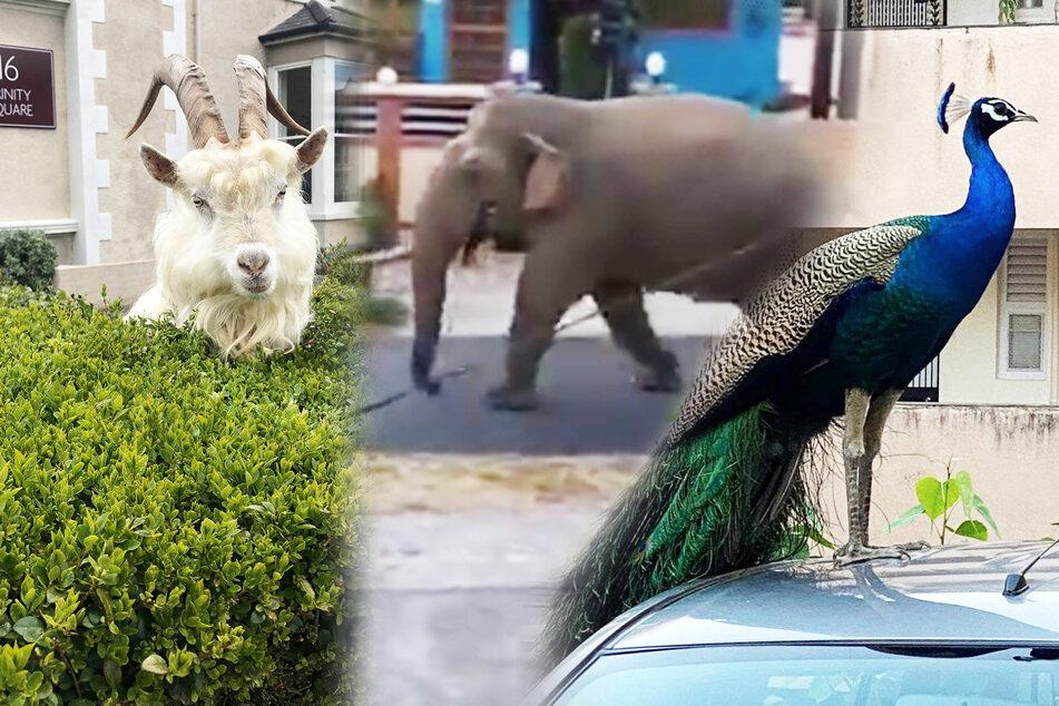 Jetzt holen sich Tiere ihre alten Reviere zurück