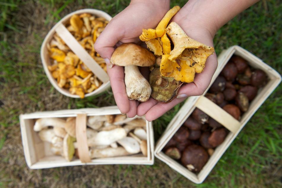 Super frisch sind Pilze ganz besonders lecker.