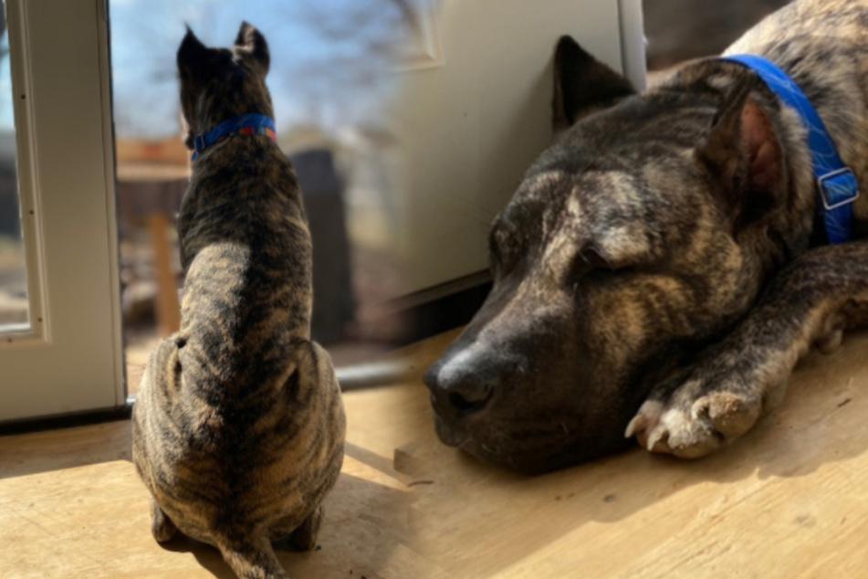 Hund völlig abgemagert auf Parkplatz ausgesetzt: Familie wird für ihn zum Glücksfall