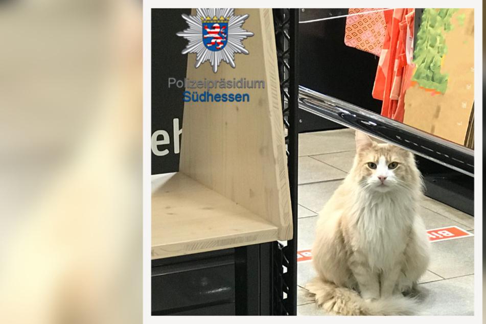 """Im Kassenbereich des Supermarkts kam den Polizisten Stadtkater """"Einstein"""" entgegen."""