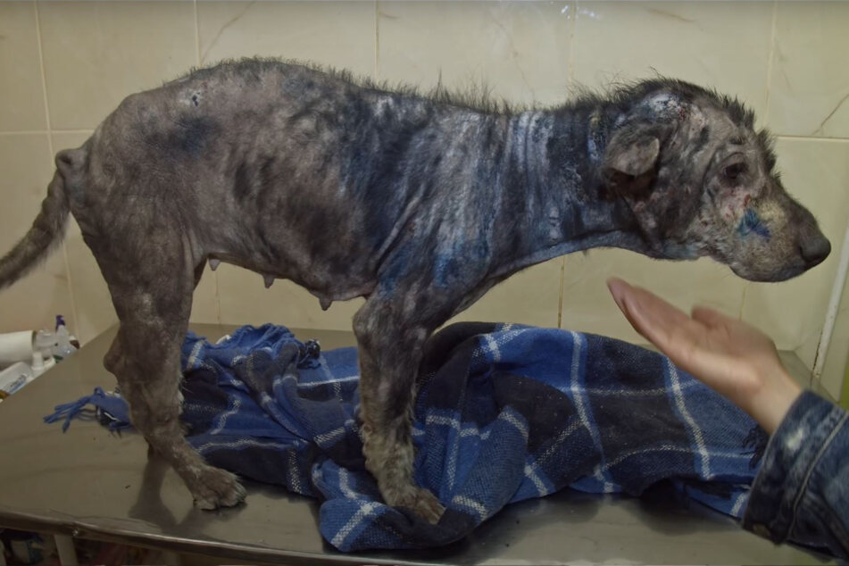Hund jault bei Rettung vor Freude: Was musste er bloß alles erleiden?