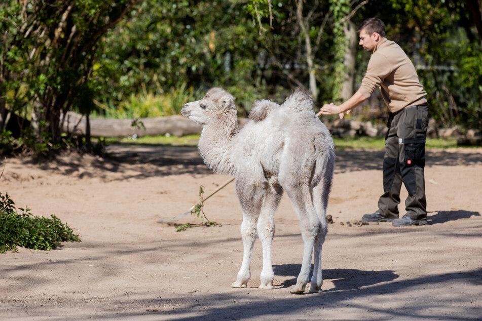 Kölner Zoo wieder geöffnet: Was Besucher beachten müssen