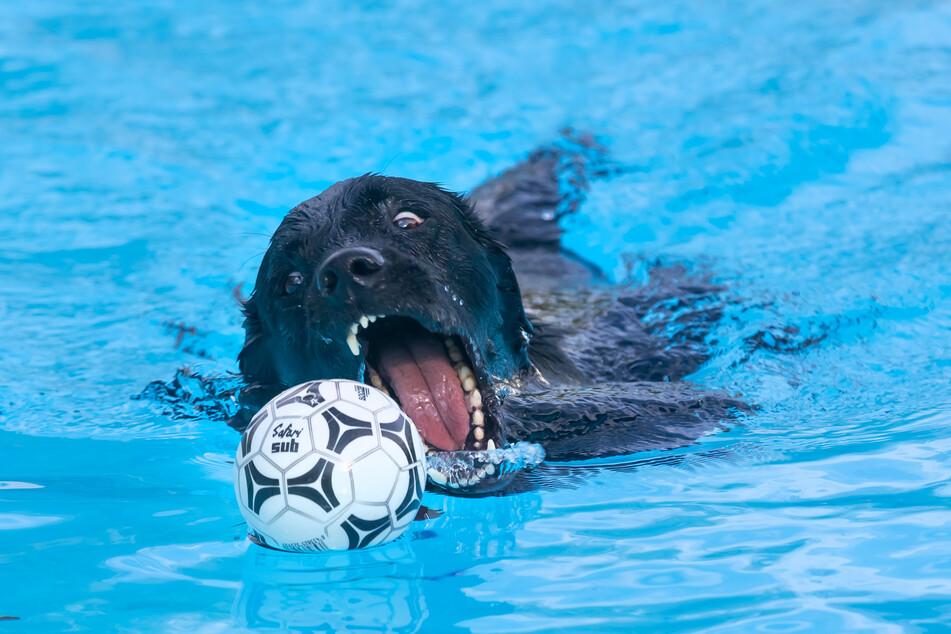 Arno (9) spielt im kühlen Nass mit einem Ball.