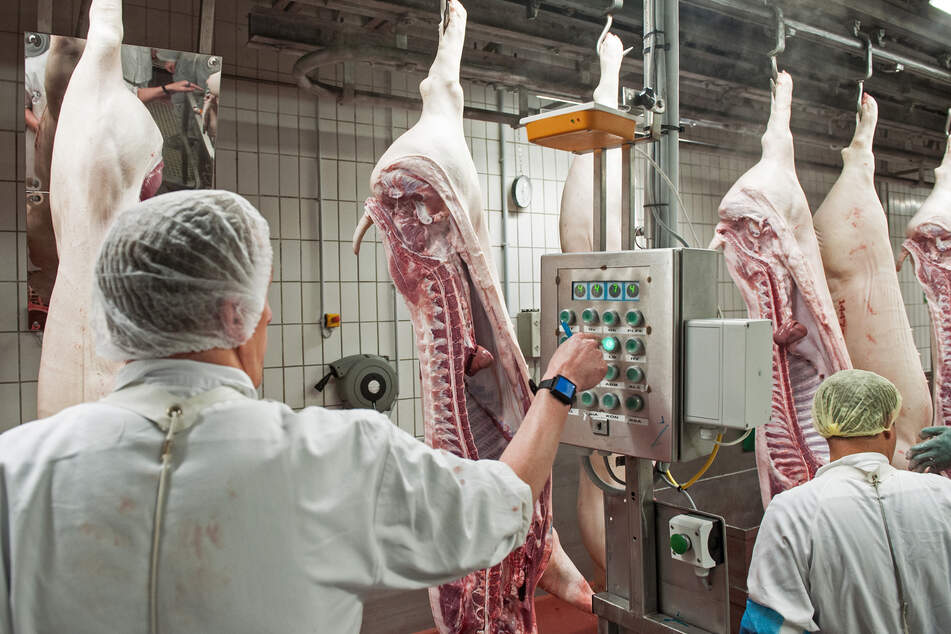 Großaktion gegen illegale Leiharbeit in Fleischindustrie