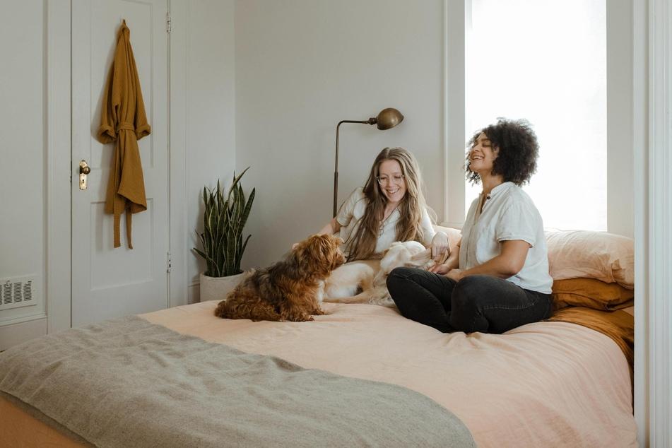 Wer sich Hunde in der Wohnung hält, sollte sich vorher genau überlegen, welche Bereiche den Vierbeinern zugänglich sein dürfen.