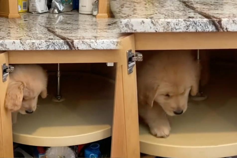 Puppy stuck in a cabinet thrills Instagram users