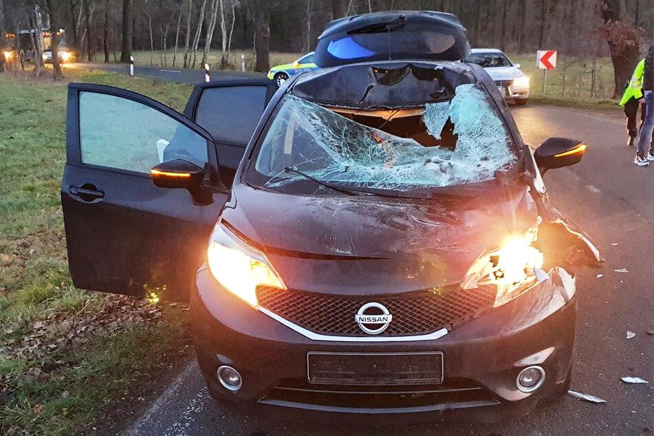 Pferd rennt in Auto: Tier tot, Fahrerin im Krankenhaus