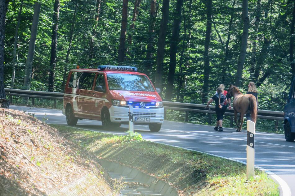 Pferd im Erzgebirge entlaufen: Feuerwehreinsatz