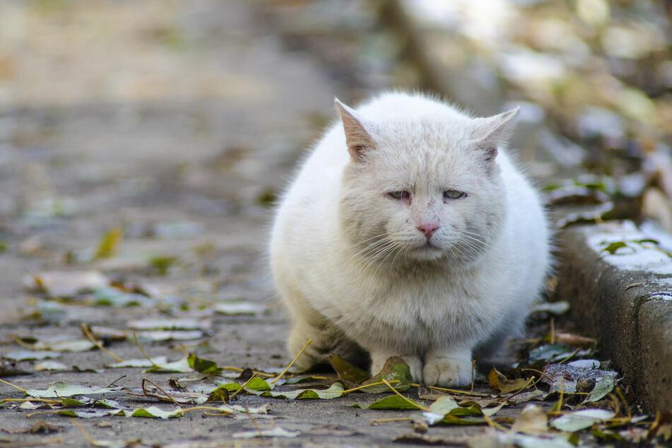 München: Polizei sucht Tierquäler: Katze mit Luftgewehr Auge ausgeschossen