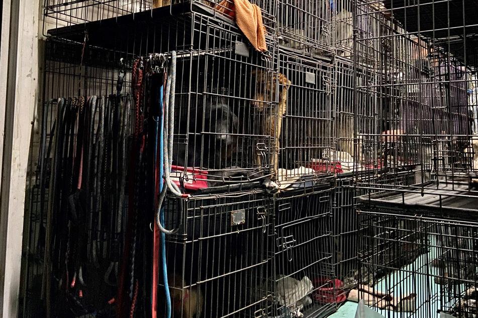 Illegaler Tiertransporter gestoppt: Dutzende Hunde und Katzen auf engem Raum eingepfercht