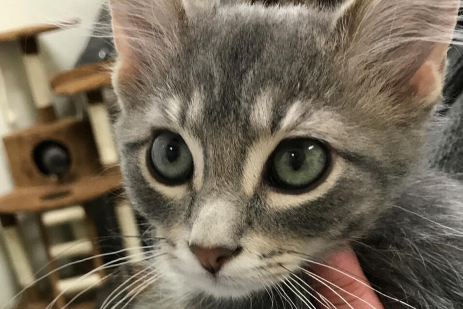 This is what Gandalf looked like a year ago.