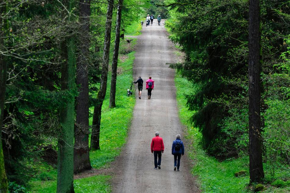 Herauf zum höchsten Punkt des Rabensteiner Waldes: So sieht der Wanderweg zum Totenstein aus.