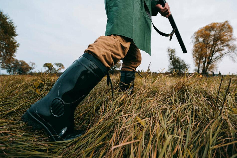 Für Wildschwein gehalten: Jäger erschießt Pferd auf Koppel
