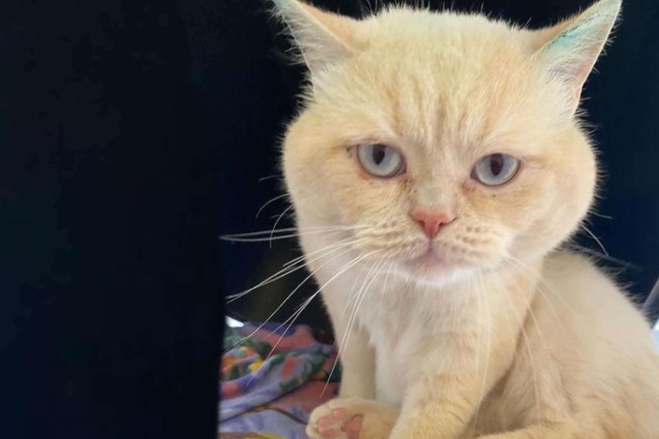 """Besitzer lassen """"böse"""" Katze von der Feuerwehr abholen: Was hat das Tier auf dem Kerbholz?"""