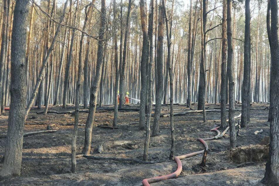 Etwa 200 Einsatzkräfte der Feuerwehr bekämpften auch am Sonntag noch den Waldbrand bei Beilrode.