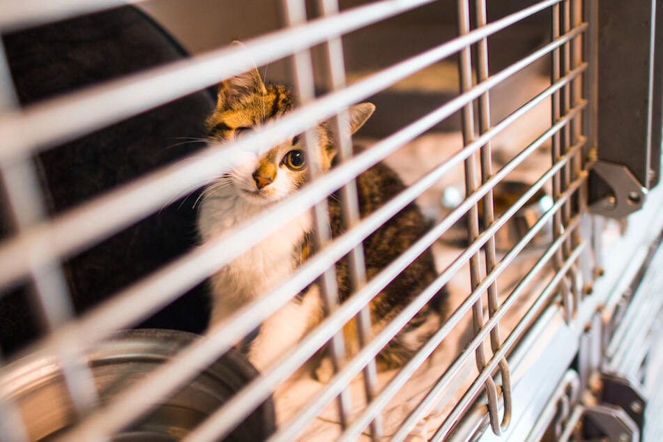 Leichtsinnig gekaufte Tiere landen oft schnell im Tierheim.