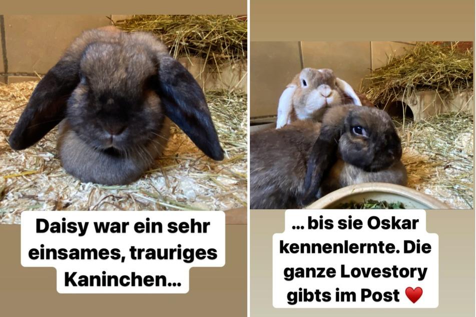 Seit ihrem Kennenlernen sind die beiden Kaninchen Daisy und Oskar unzertrennlich. (Fotomontage)