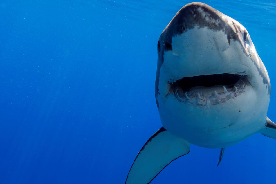 Experts warn that half a million sharks may be killed for Covid-19 vaccine