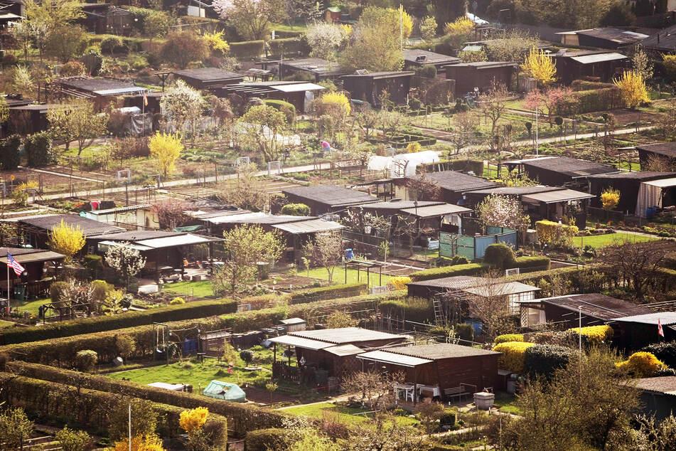 Schrebergärten sind wieder in: Gerade in der Corona-Pandemie wünschten sich viele Sachsen ein eigenes Kleinod.