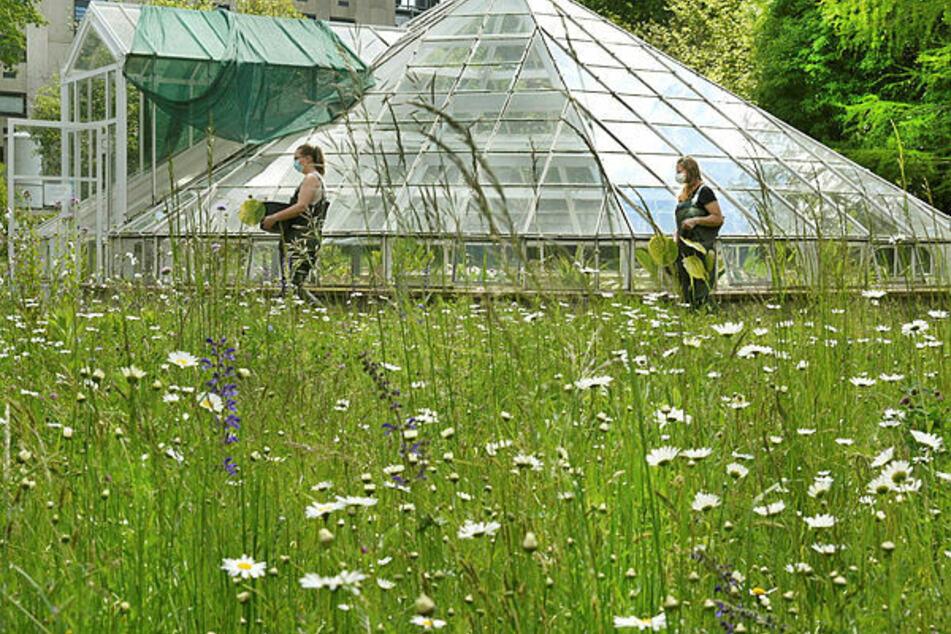 Der Botanische Garten Leipzig ist auf Spenden für seine Schmetterlinge angewiesen.