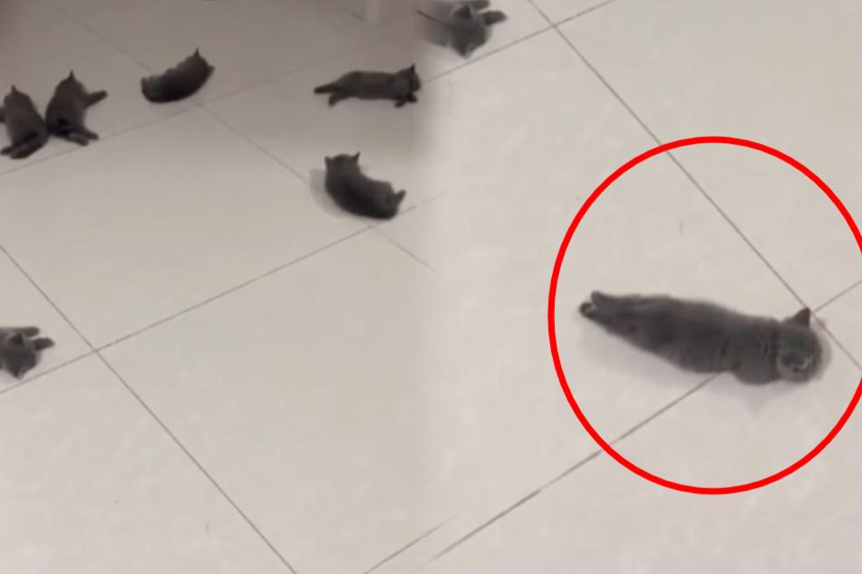 Reddit-User macht Fußbodenheizung an und bekommt dieses Bild geboten