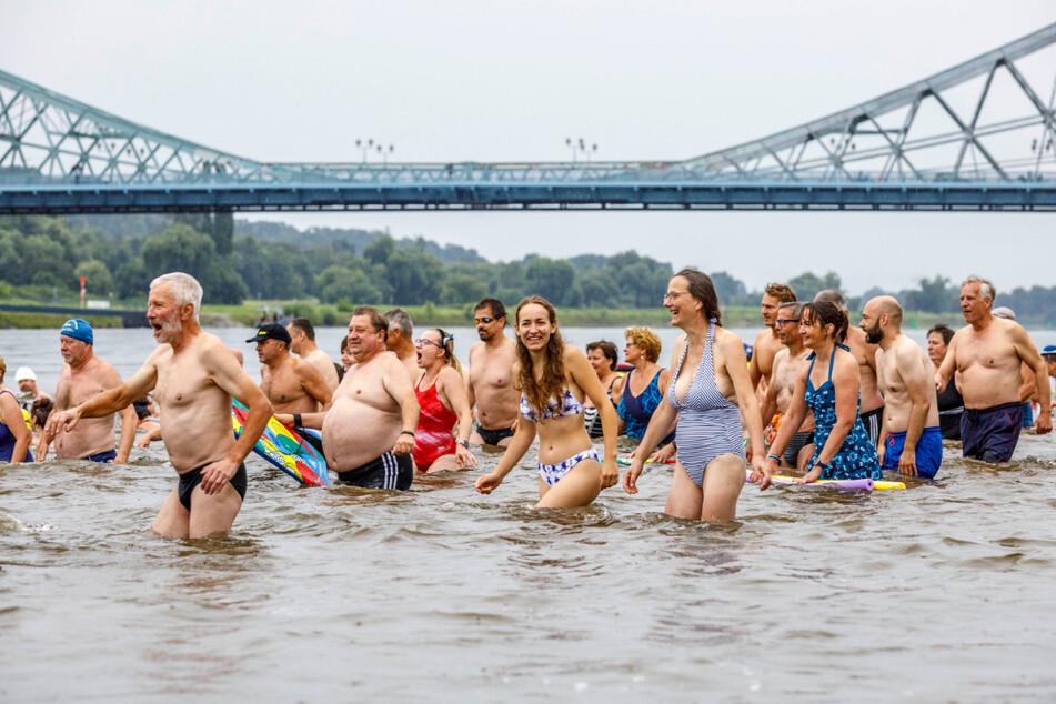 Massenstart: Unterhalb des Blauen Wunders steigen rund 950 Elbschwimmer in die Elbe.