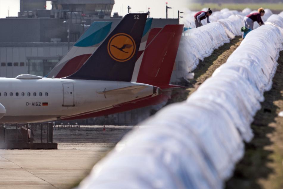 Corona-Hickhack: Jetzt dürfen Saisonarbeiter aus Rumänien einfliegen