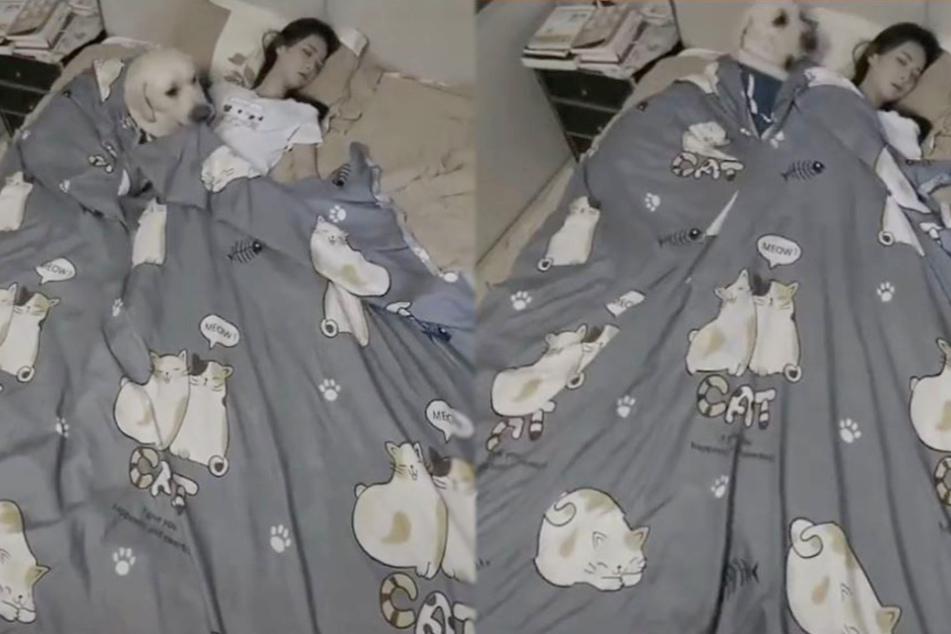Der liebevolle Hund deckt sein Frauchen zu.