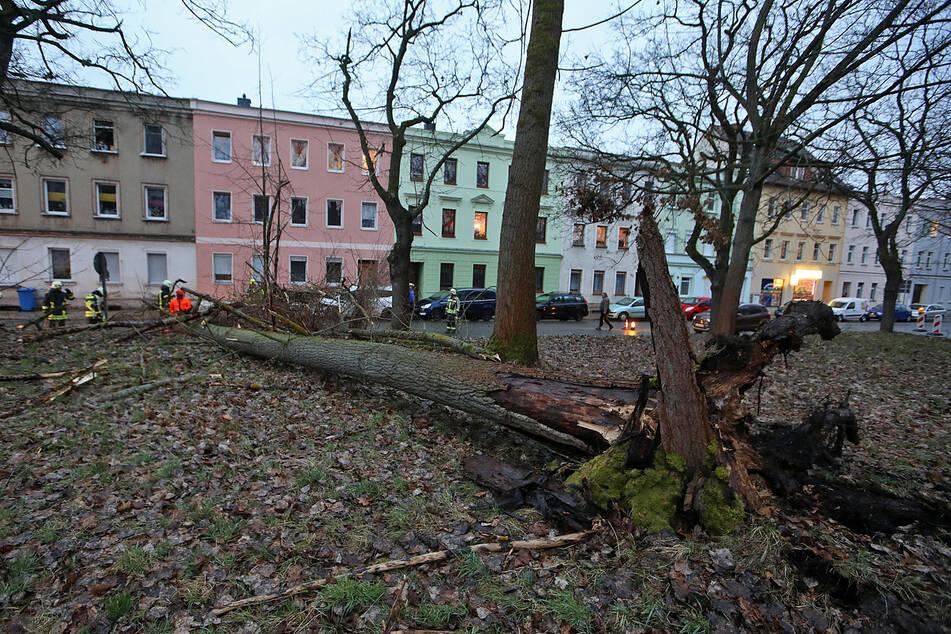 Sturmtief Klaus fegt mit bis zu 100 km/h über Sachsen: Baum entwurzelt, Straße gesperrt