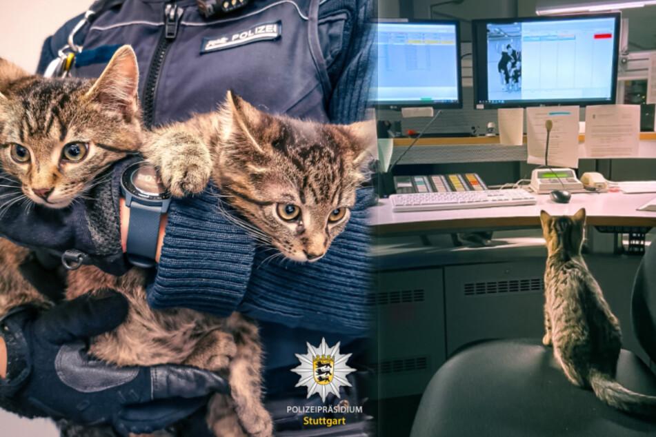 Flauschige Besucher bei der Polizei: Besitzer von Babykatzen gesucht!