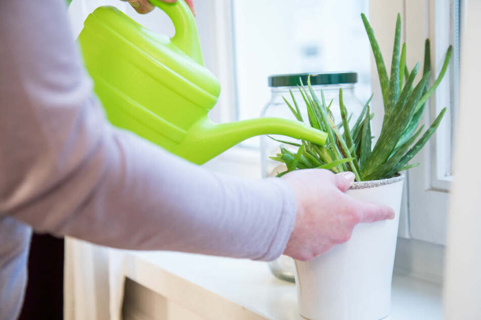 Versicherungen wollen neue Leistungen für ihre Kunden anbieten, zum Beispiel Blumengießen während eines Urlaubs.