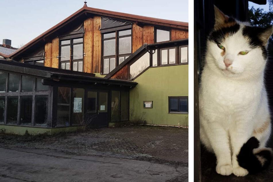 Stillgelegtes Ausflugsziel wird für Nivea-Hersteller abgerissen: Wohin mit den Katzen?