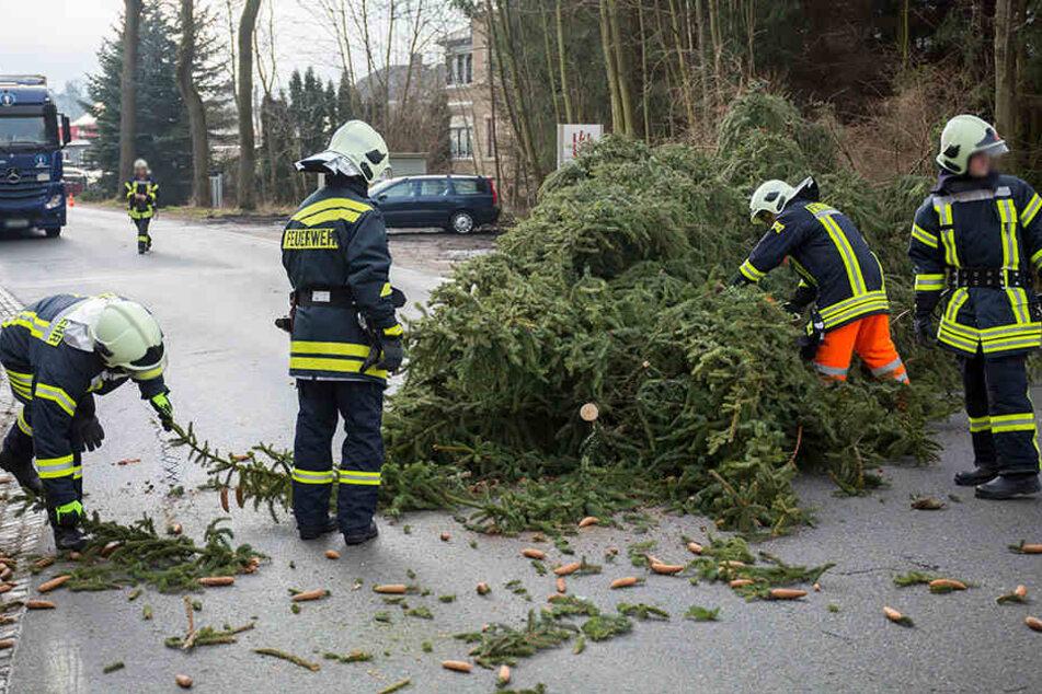 In Sehma stürzte eine große Fichte auf die Karlsbader Straße.