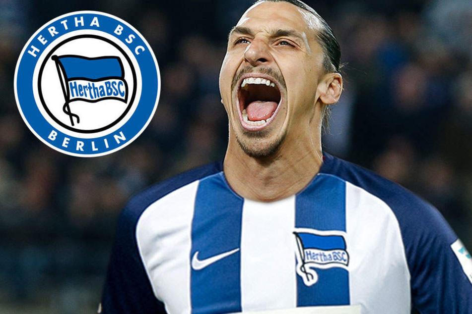 Hertha lockt Ibrahimovic mit Deutscher Meisterschaft
