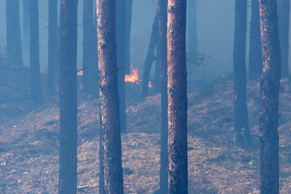 Im Wald sind kleine Feuer und viel Qualm zu sehen.