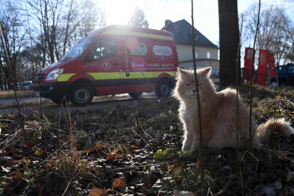 Eine Katze sitzt vor einem Rettungswagen der Tierrettung München e.V.