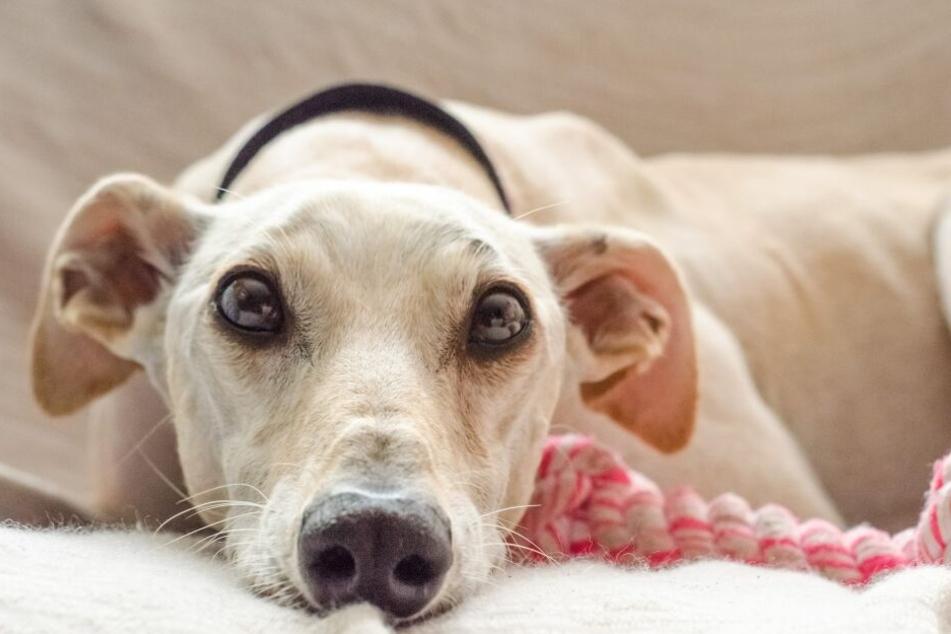 Wenn Hunde ihrem Herrchen das Lieblingsspielzeug überlassen, ist das ein Zeichen von Zuneigung.