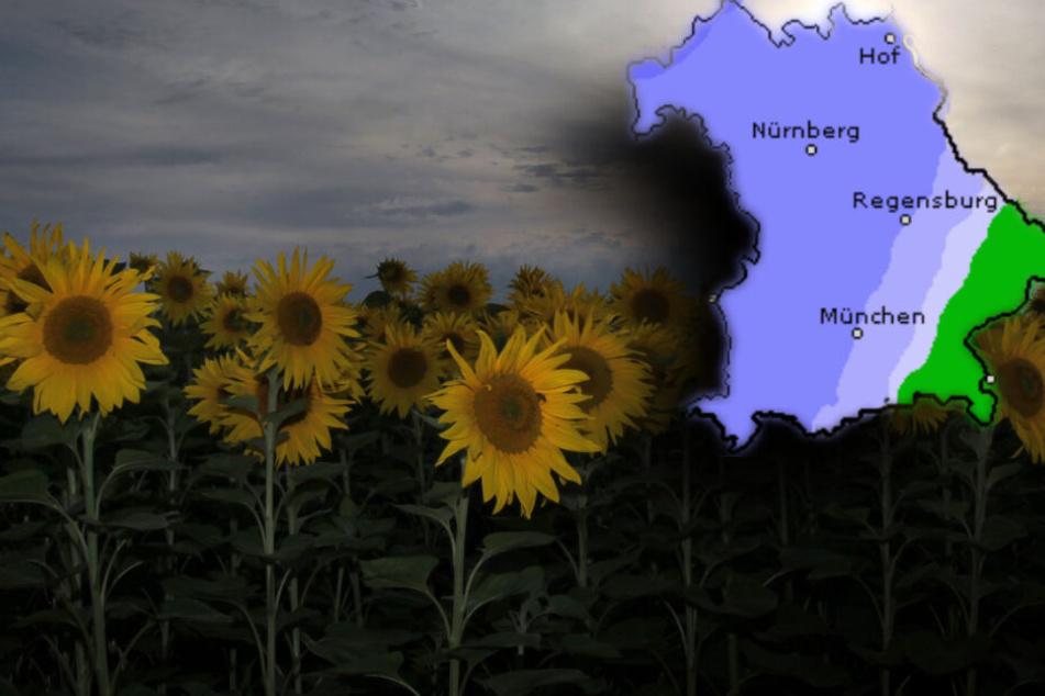 Sonnenblumen vor Regenwolken in Niederbayern: Das Wetter in Bayern soll am Wochenende wechselhaft werden. (Bildmontage)